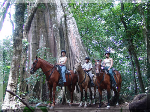 Horseback riding in Monteverde, Costa rica